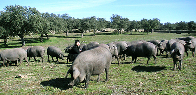 Takahito Nakano, our fourth generation manager, surrounded by Iberian pork.