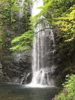 The Forest of Meiji Minoh Quasi-National Park The Great Minoo Waterfall